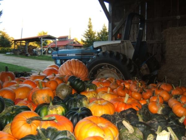 HarvestWagon