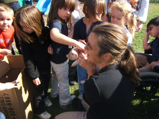 Des w/kindergarteners & piglets